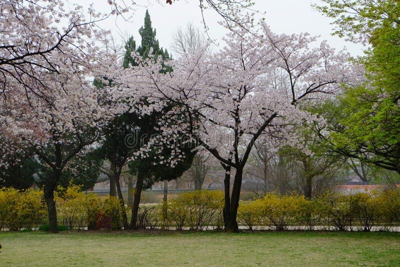 Korae庭院 免版税库存照片
