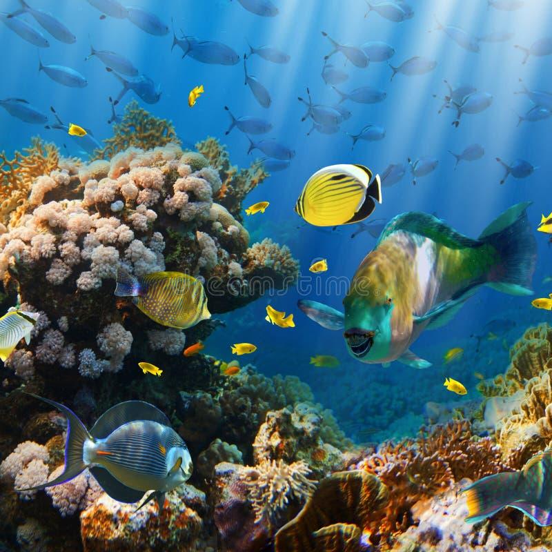 Koral i ryba obraz royalty free