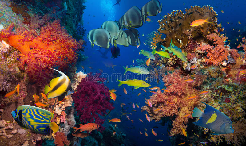 Koral i ryba obrazy stock