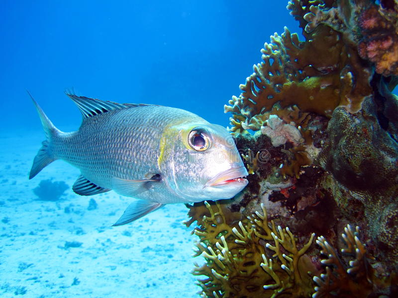 korala ryba rafa obraz stock