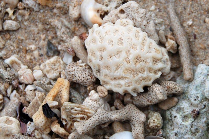 korale zdjęcie stock