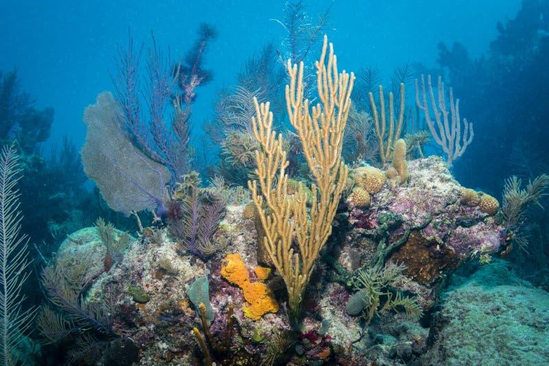 koralen stock afbeeldingen