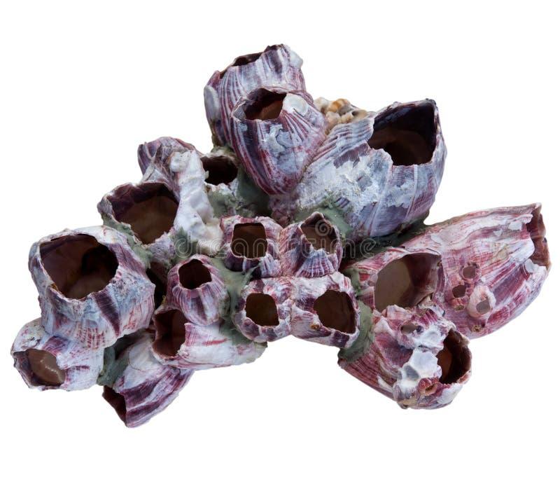 Koralen stock afbeelding