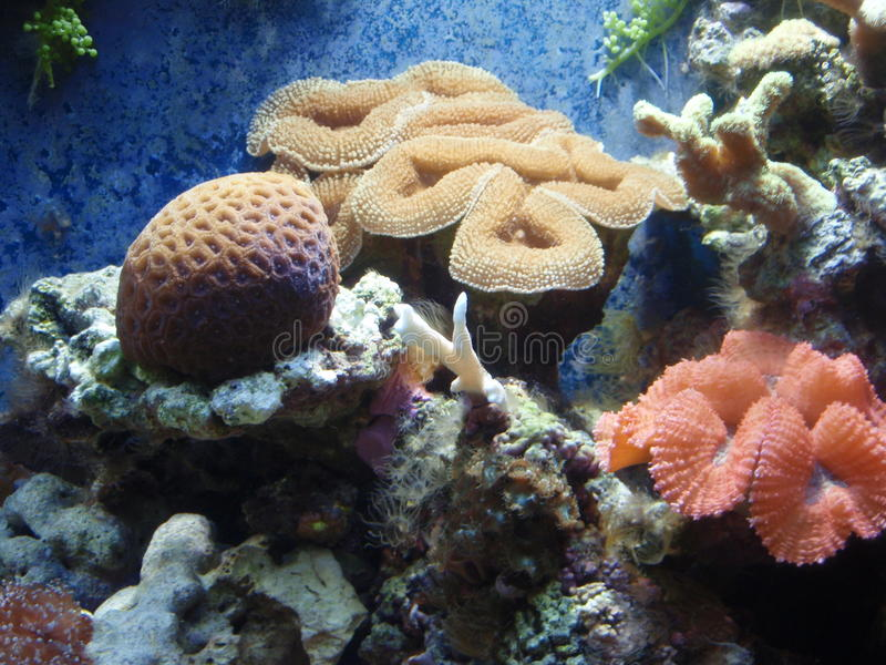 Koralen royalty-vrije stock foto
