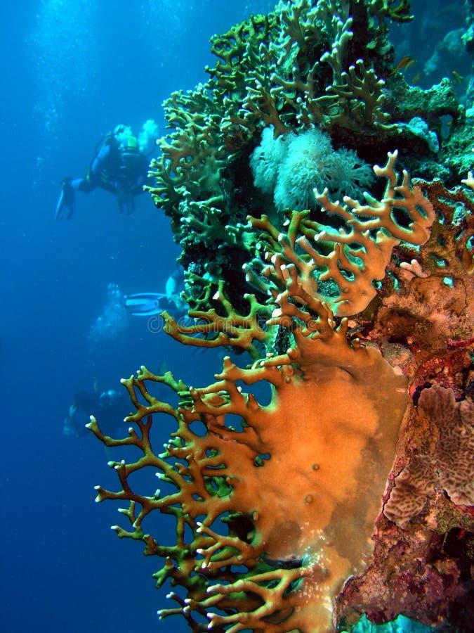 Koralen stock foto