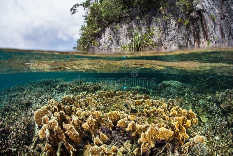 Koralen die dichtbij Kalksteeneiland groeien in Raja Ampat stock foto's