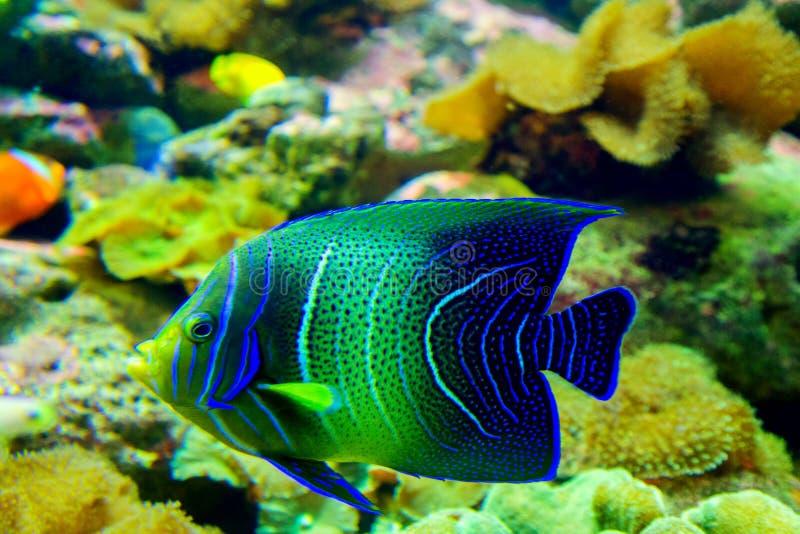 Koralen en tropische vissen stock fotografie