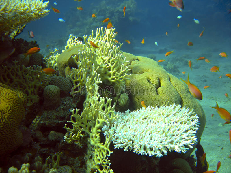 Koralen en vissen stock foto's
