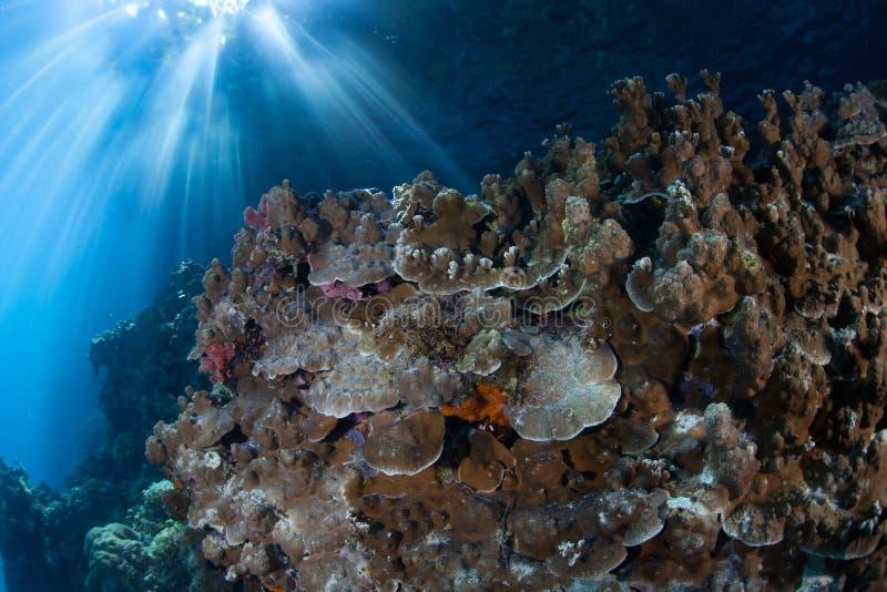 Koralen en Zonlicht stock afbeeldingen