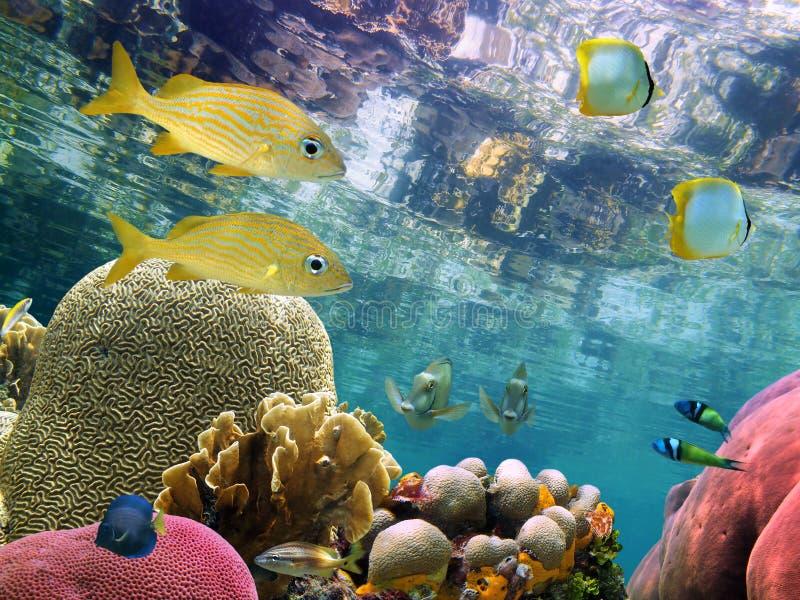Koralen onder waterspiegel stock afbeeldingen
