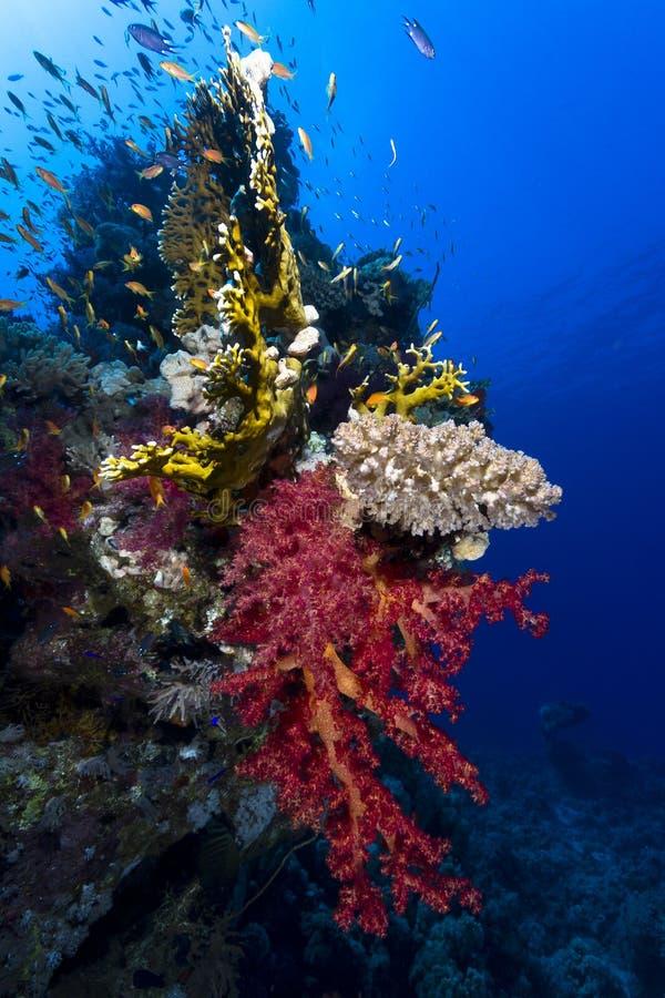 Koralen Onderwater royalty-vrije stock afbeeldingen