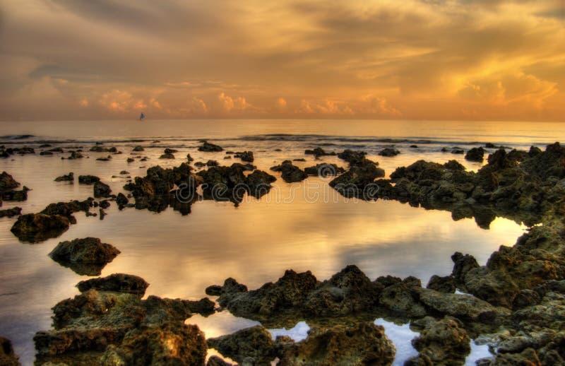Koralen van het Toenemen Zon royalty-vrije stock afbeeldingen