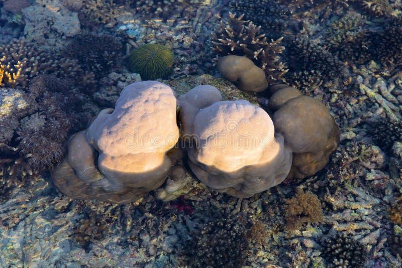 Koralen voor groot getijde, Nusa Penida, Indonesië stock foto