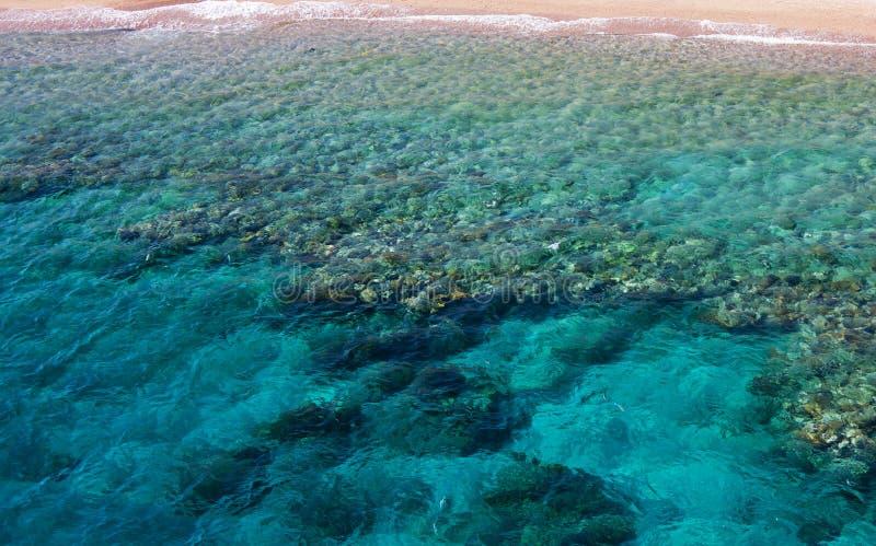 Koralen in water stock foto