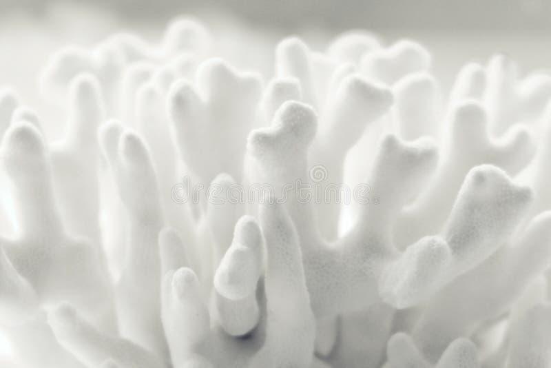 korall royaltyfri bild