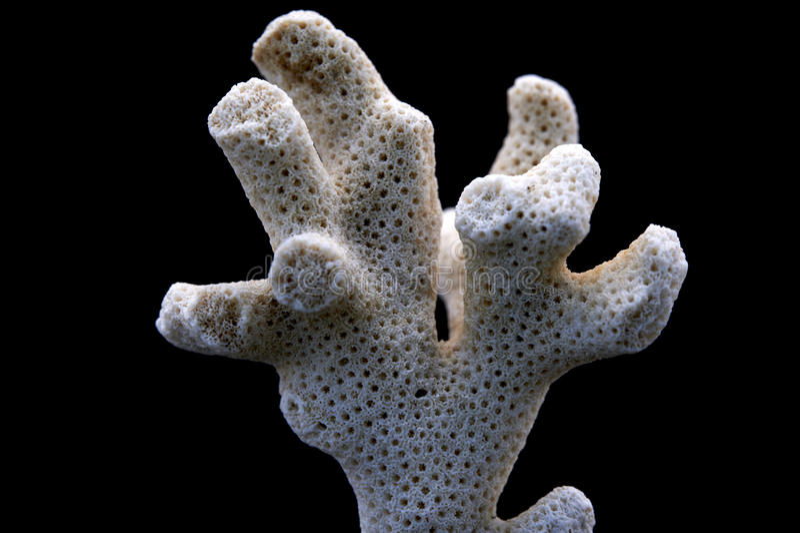 korall arkivbild
