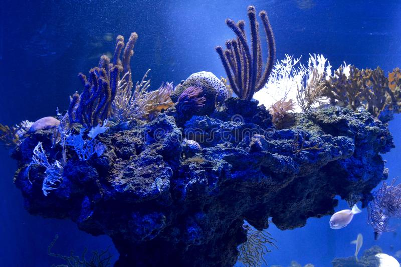 korall i saltvattens- akvarium royaltyfria bilder