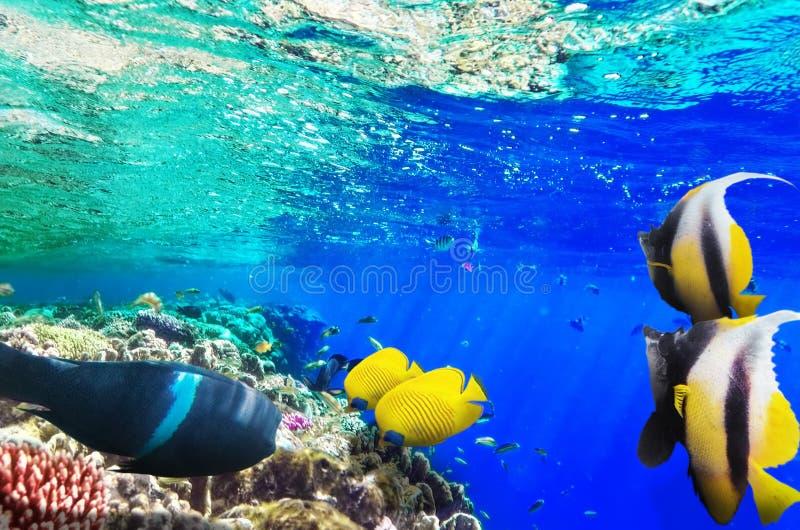 Korall och fisk i Röda havet. Egypten Afrika. arkivfoton