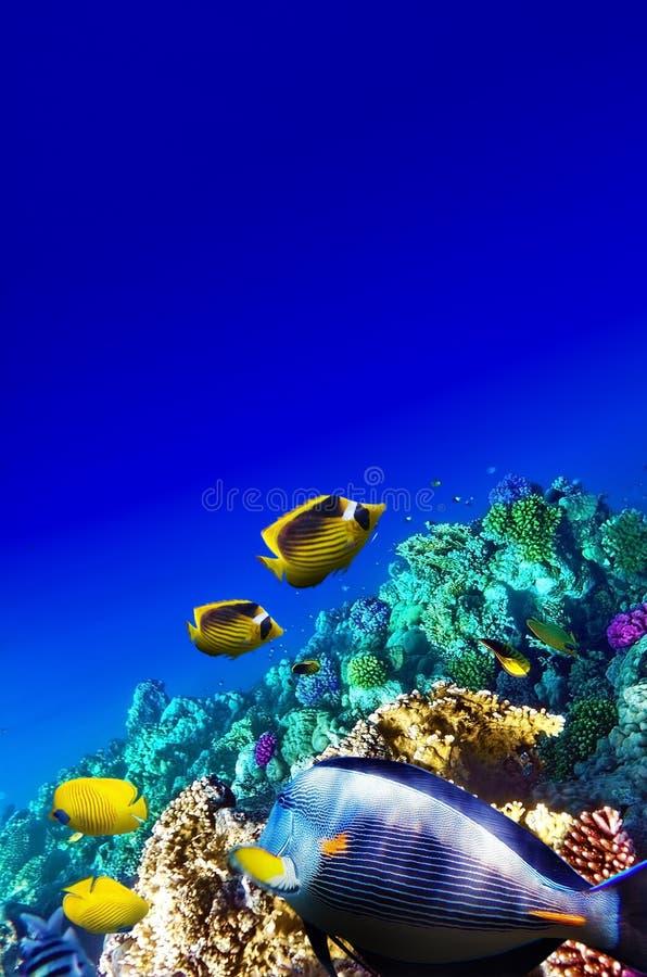 Korall och fisk i Röda havet. Egypten Afrika. royaltyfri foto