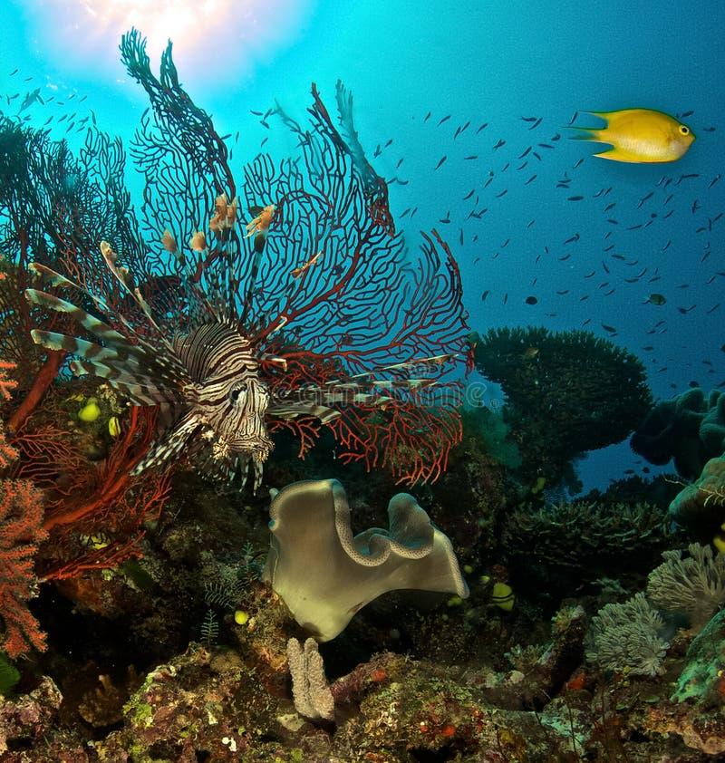 Korall- och skorpionfisk royaltyfri foto