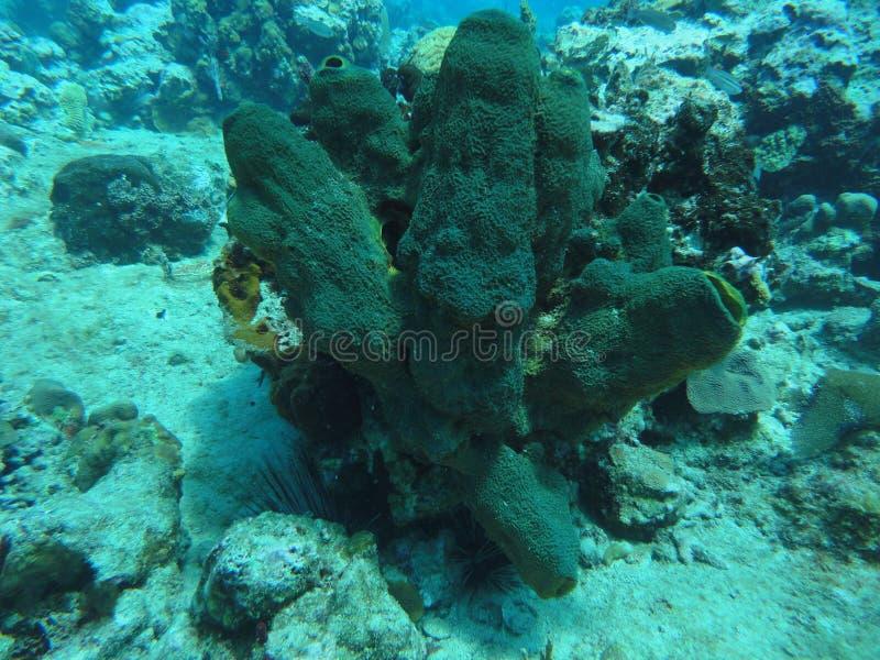 Korall på havsbottnen arkivfoto