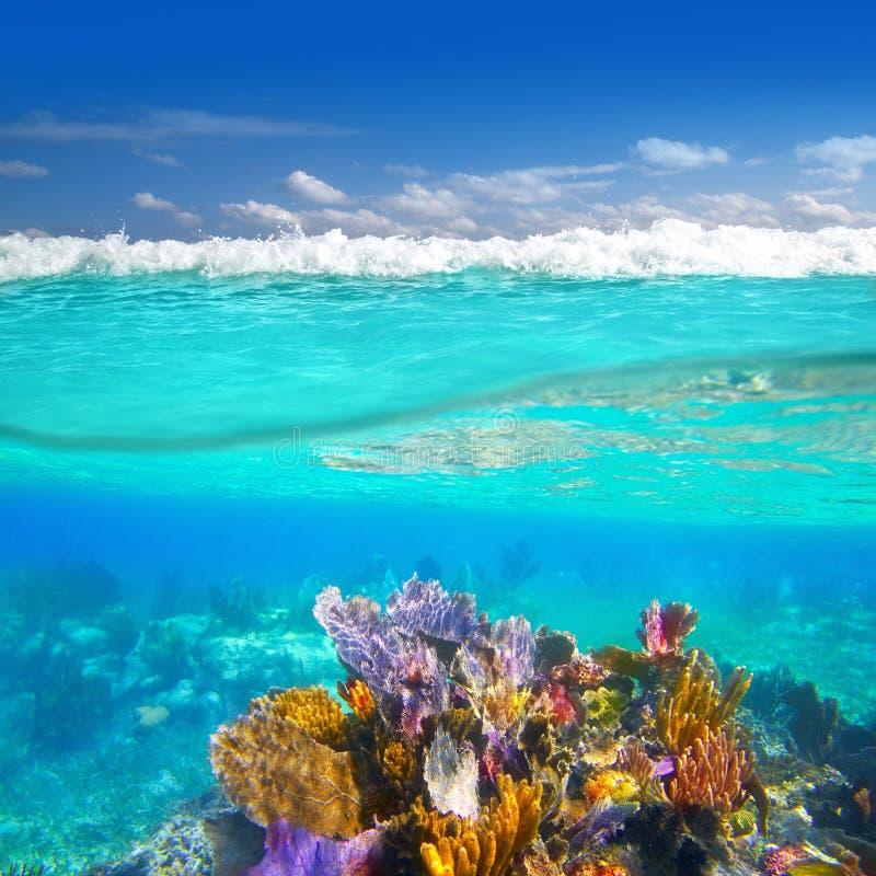 korall revar ner undervattens- övre waterline royaltyfri fotografi