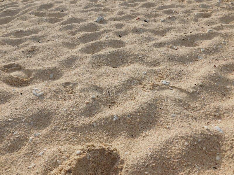 Korall sand, spår, abstrakt begrepp, sikter arkivbild