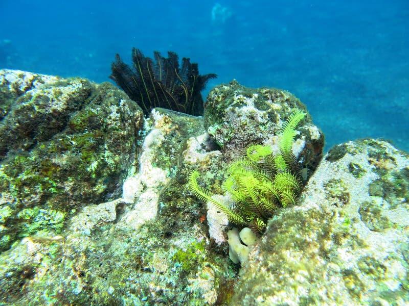 Korallberggrund i Balinesehavet fotografering för bildbyråer