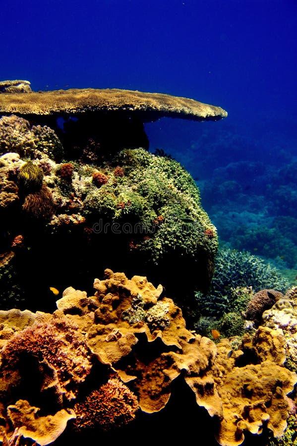 korallbildandetabell arkivbilder