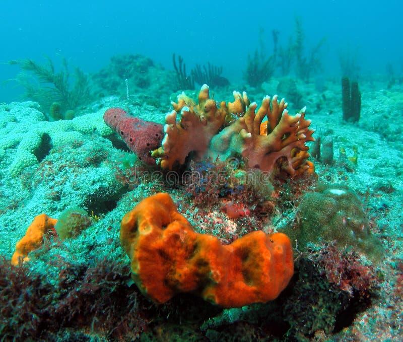 korallbrand arkivfoto