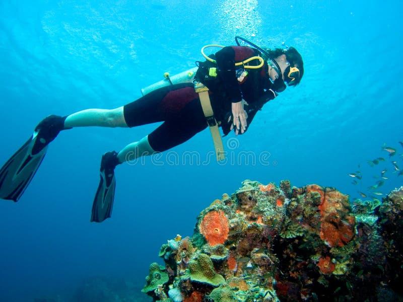 koralldykare över reven arkivbild