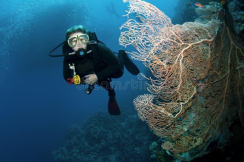 koralldykarescuba arkivbild