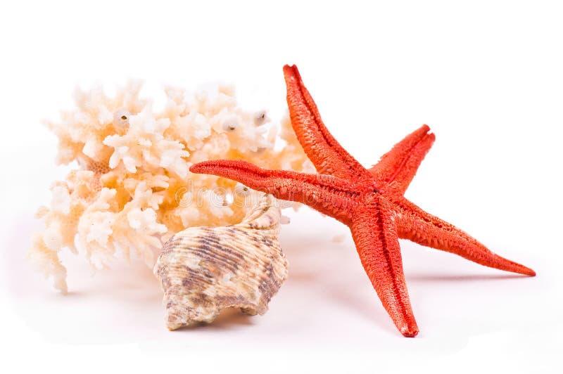 Koralle, Meerstern und Seashell stockfotografie