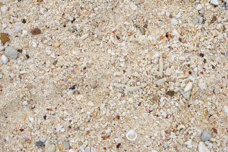 Koralle mit Oberteil auf weißem Strand lizenzfreies stockbild