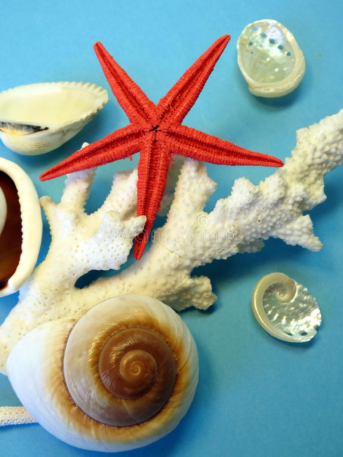 Koralle, Oberteile und Starfish lizenzfreies stockbild
