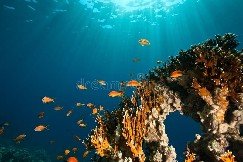 Koralle, Ozean und Fische stockfotos