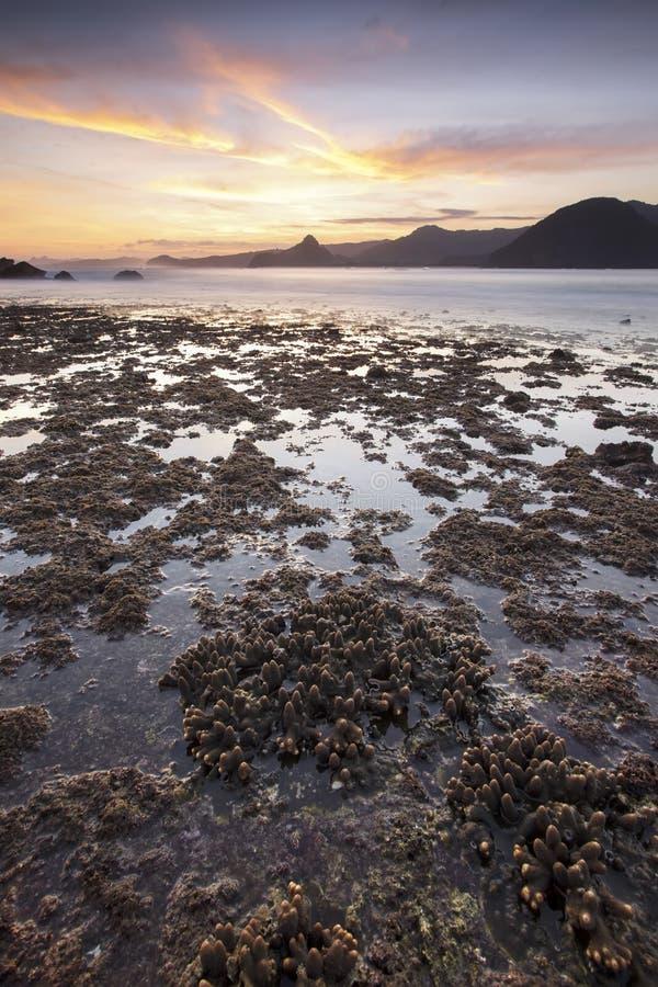 Koralle an Strand Selong Belanak während der Ebbe lizenzfreies stockbild