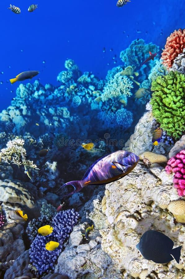 Koralle und Fische lizenzfreie stockbilder