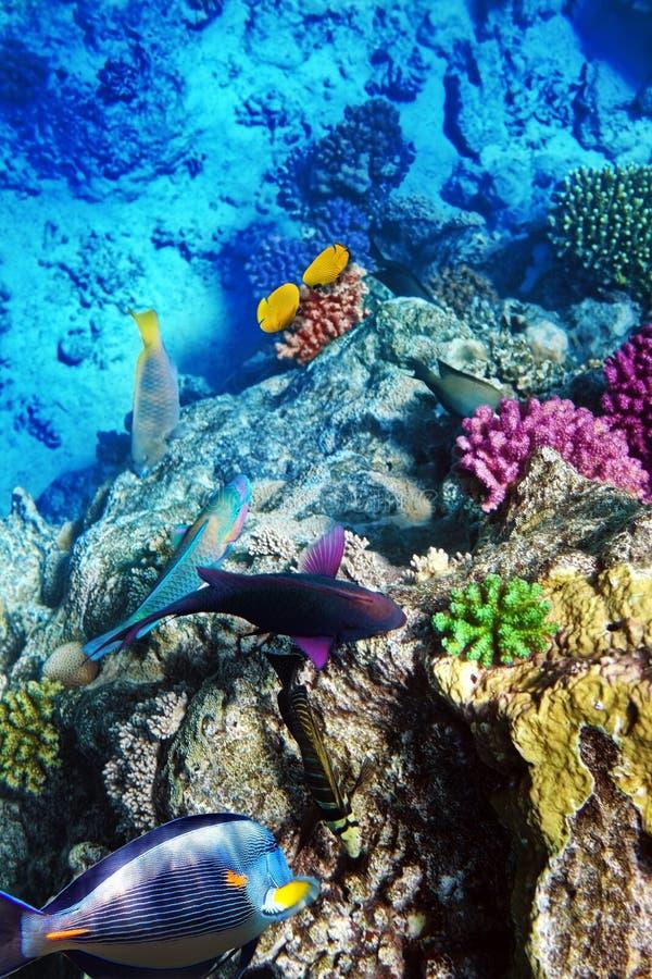 Koralle und Fische lizenzfreie stockfotografie