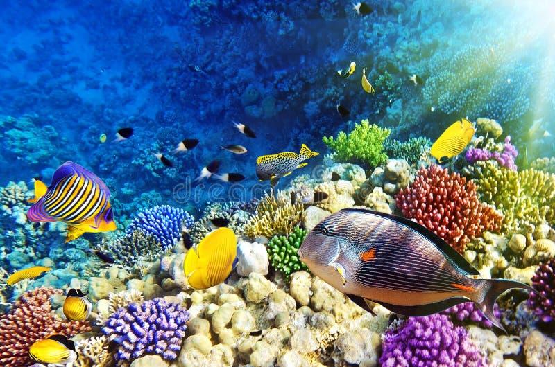 Koralle und Fische im roten Sea.Egypt stockfoto