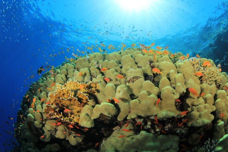 Koralle und Fische im Sonnenlicht lizenzfreies stockbild