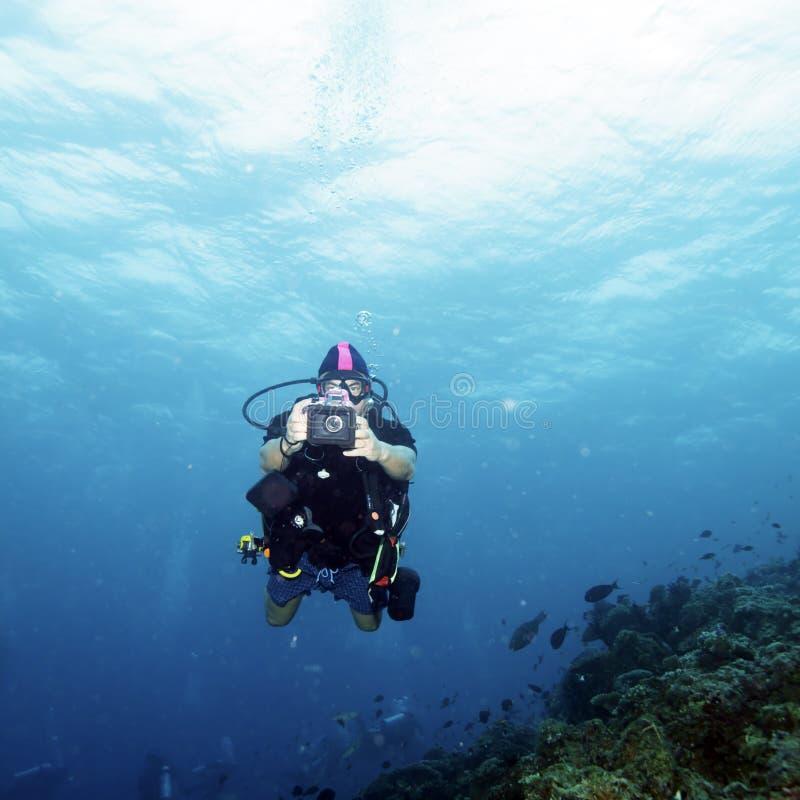 Korallen und Sporttaucher mit Foto stockbilder