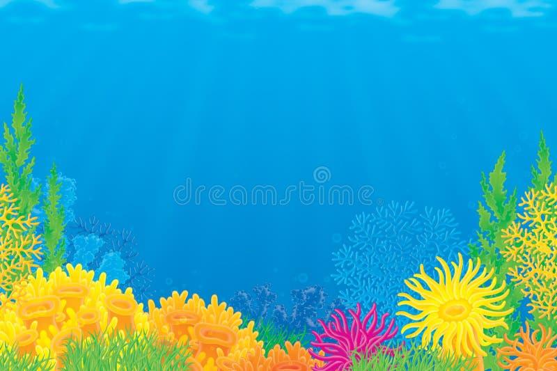 Korallenriff lizenzfreie abbildung