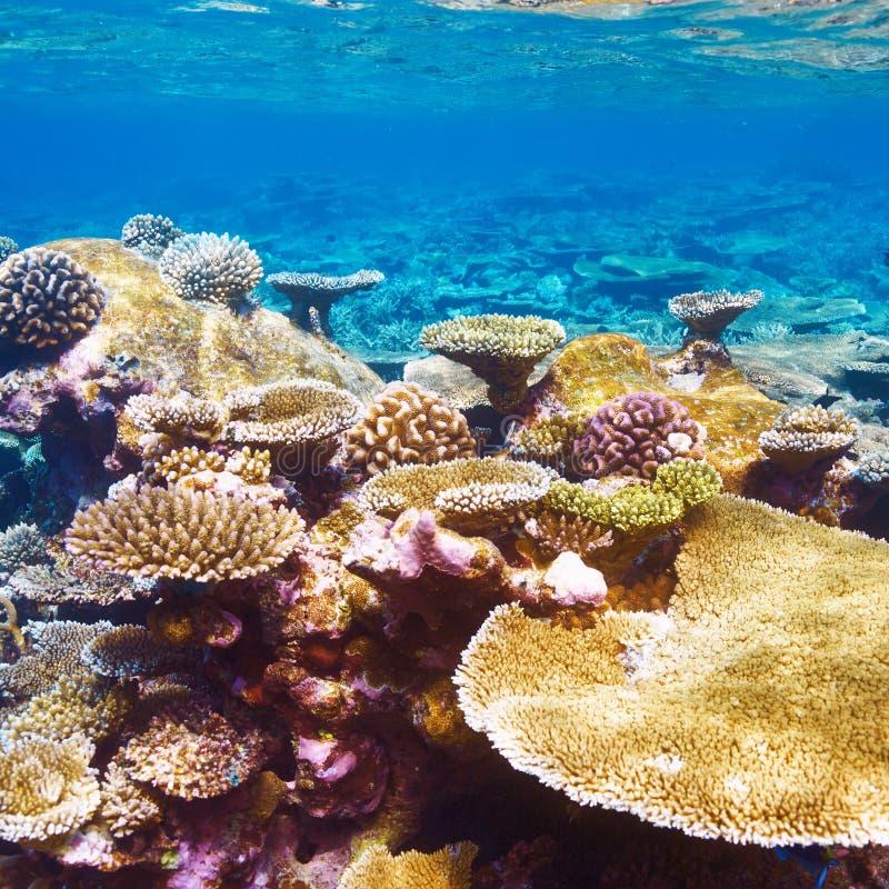 Korallenriff bei Malediven lizenzfreies stockfoto