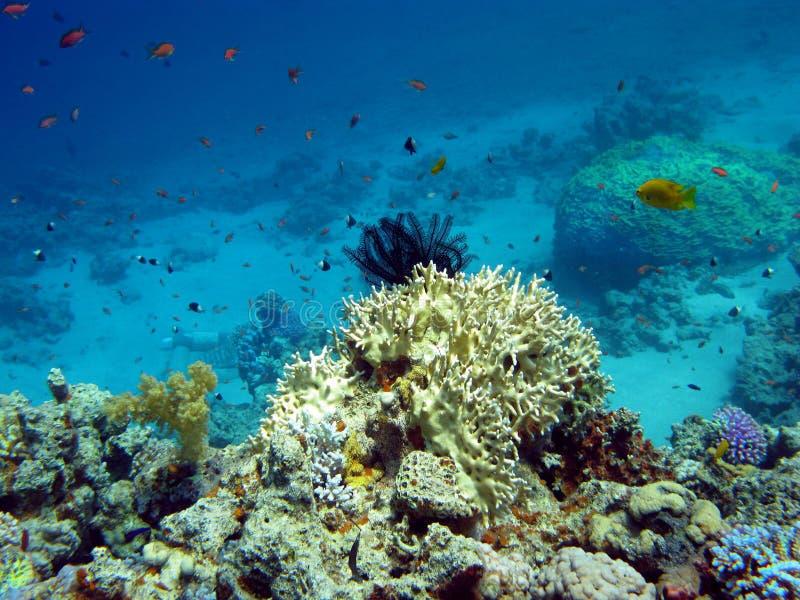 Korallenriff mit den harten und weichen Korallen lizenzfreie stockbilder