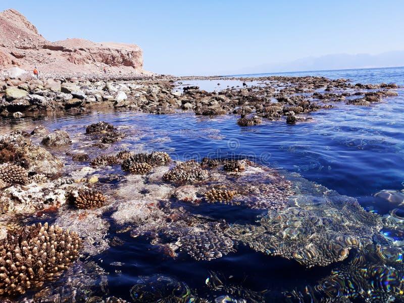 Korallenriff nahe dem Ufer des Roten Meers, des Horizontes und des Berges stockbilder