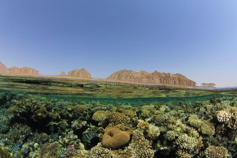 Korallenriff und Sinai-Wüste stockfotos