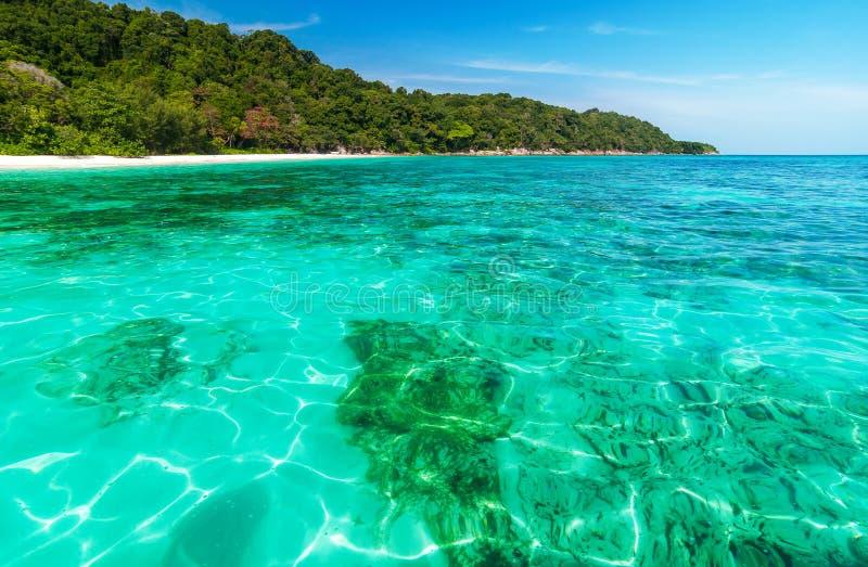Korallenriff unter haarscharfem Meer lizenzfreie stockbilder