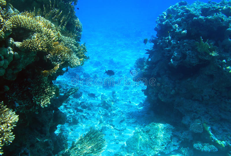 Korallenriff von Rotem Meer stockbild