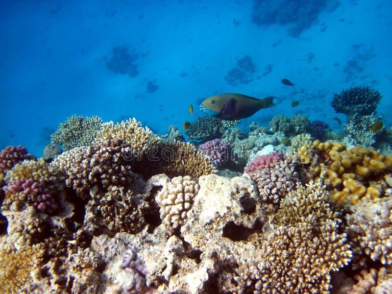 Korallenriffe und Fische stockfotos